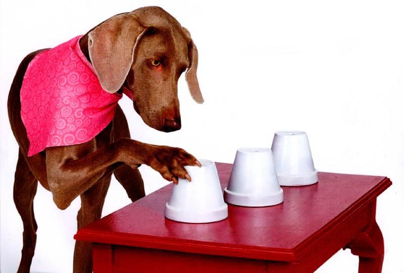 Во что поиграть с собакой, когда нельзя выйти на улицу?, изображение №4
