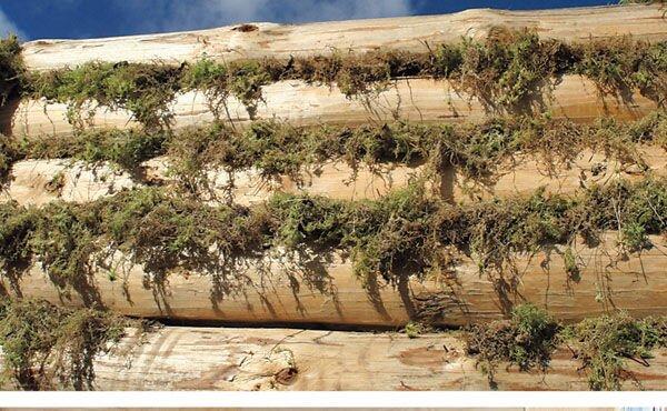 Как и чем уплотнять пазы, швы и стыки сруба дома из бруса и бревна? - фото pic_e1fc1dd9113e7d6_1920x9000_1.jpg