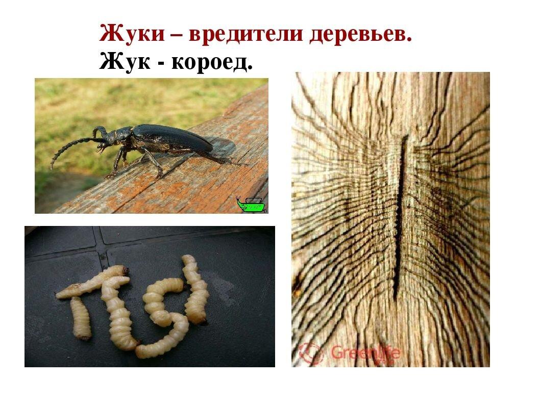 pic_32f9832a9638ba6_1920x9000_1.jpg