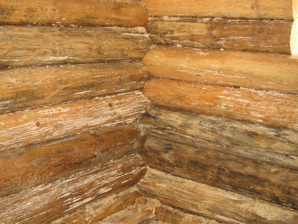 Каким образом уничтожить грибок в деревянном срубе? - фото pic_6a5a2c5b523661e_1920x9000_1.jpg