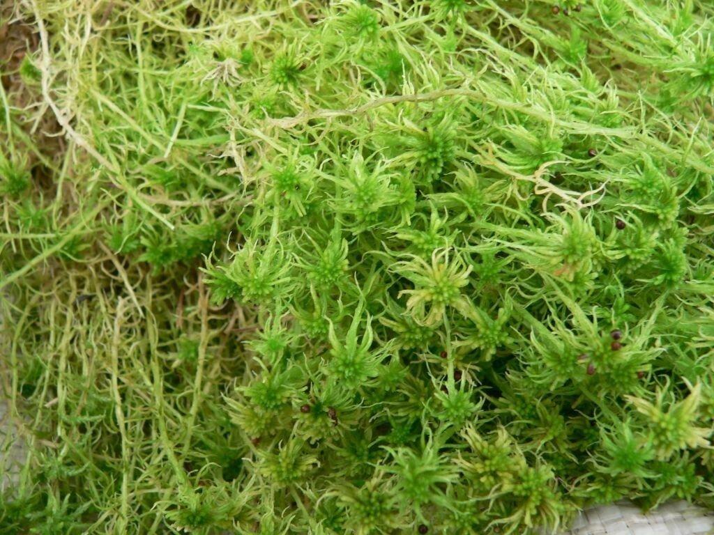 Мох для бани - фото мох для бани из бревна