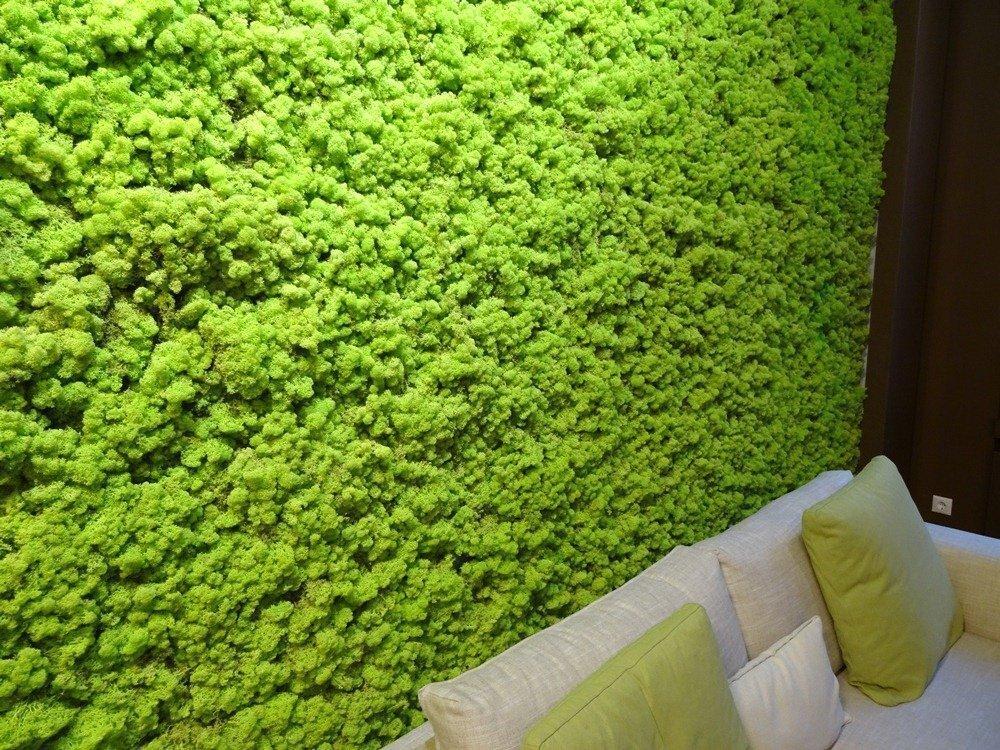 мох на стене в декоре интерьера