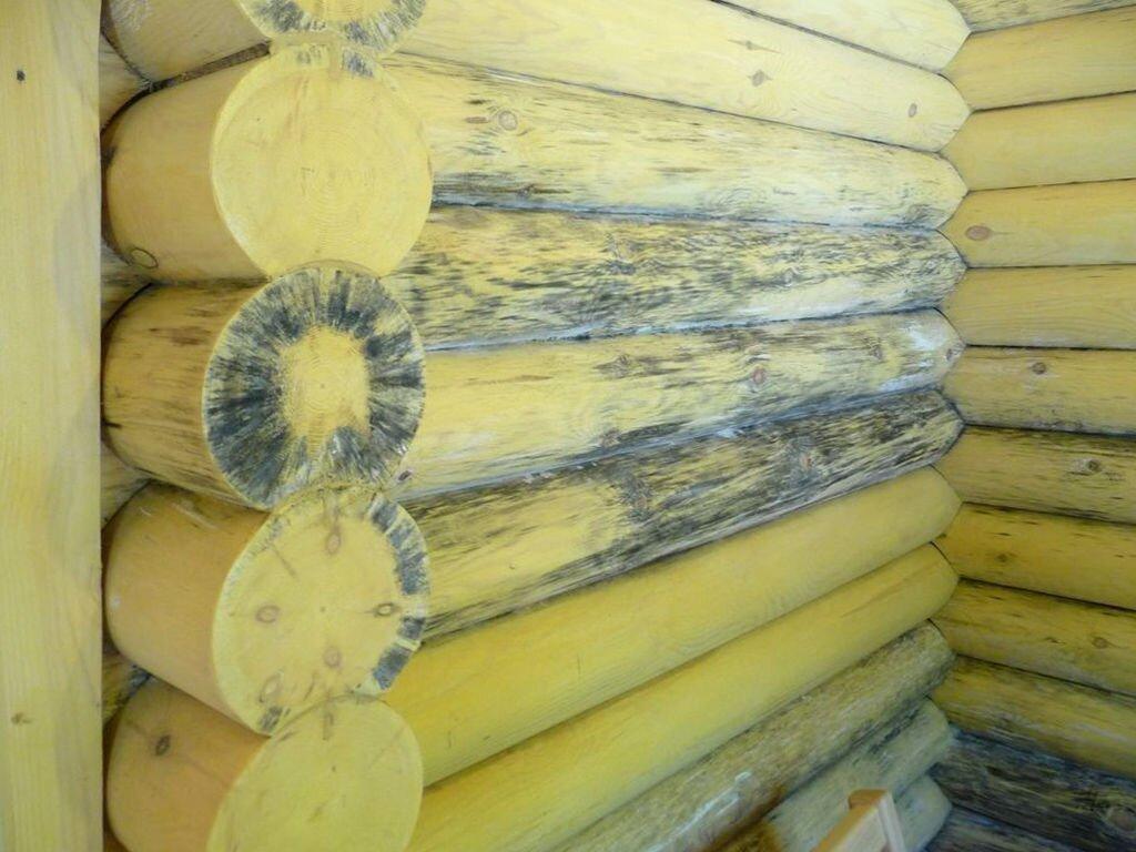 Каким образом уничтожить грибок в деревянном срубе? - фото pic_30e42328a87e4e7_1920x9000_1.jpg