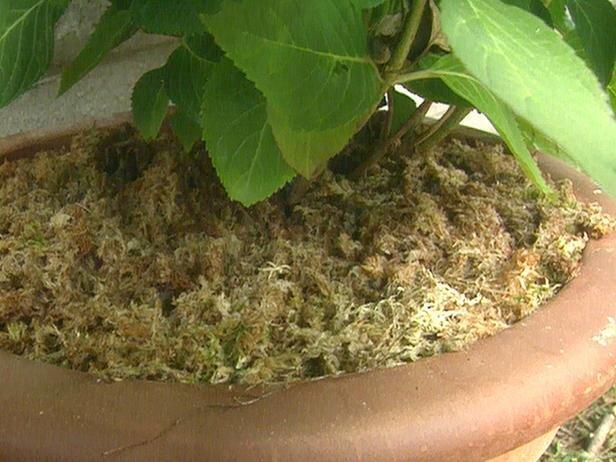 мох для комнатных растений