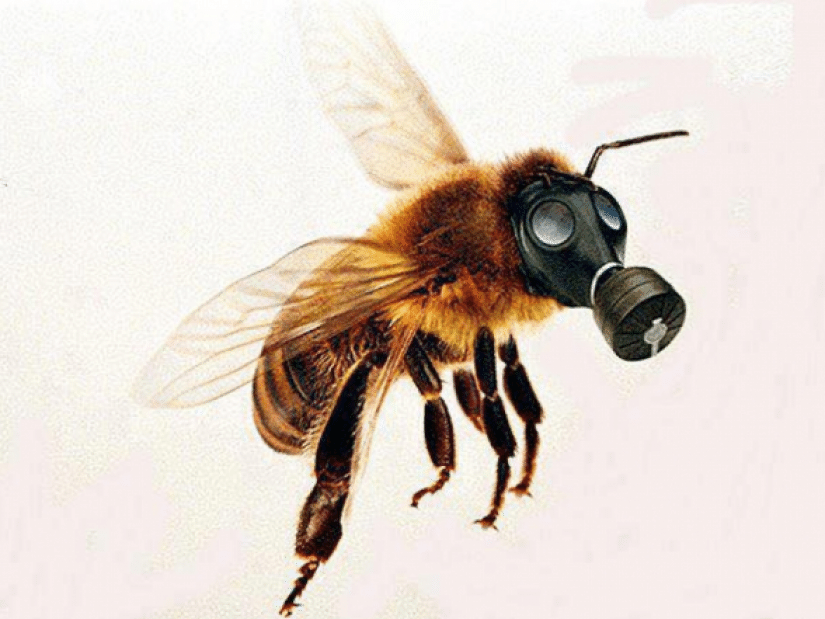 Отравления пчел, профилактика и лечение токсикозов - фото pic_b07c4d0431df2c70bd4cff042f016e8e_1920x9000_1.png