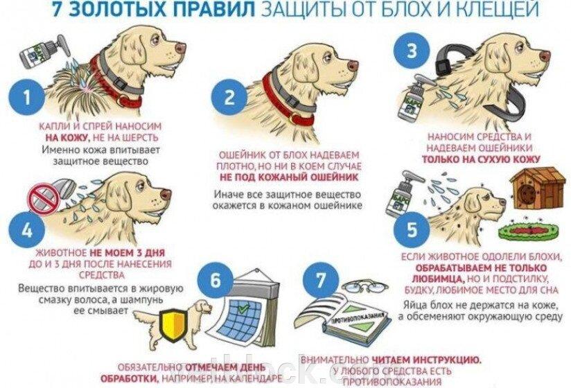 Капли, спрей, ошейник или таблетки. Что лучше от клещей для собаки? - фото pic_1f119e58e8bb5791141efc87ba82a7a3_1920x9000_1.jpg
