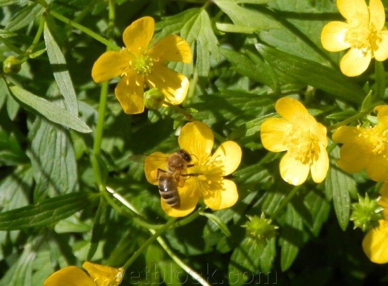 Отравления пчел, профилактика и лечение токсикозов - фото pic_e81e9652d2ec8cd59bbfe6d00271426b_1920x9000_1.jpg