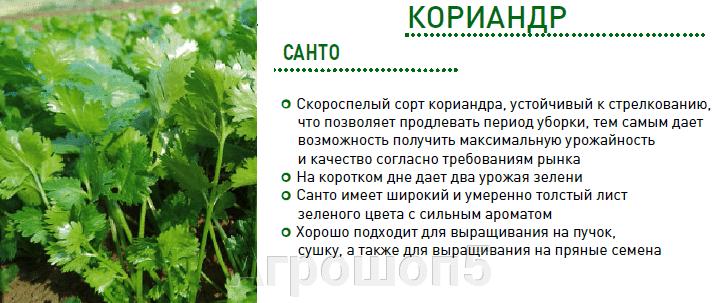 Кориандр | кинзаСанто. 500 грамм. Sakata. Урожайный скороспелый не стрелкующийся сорт кориандра. - фото pic_5924c9760a553a65f1c0a7db7c5af331_1920x9000_1.png