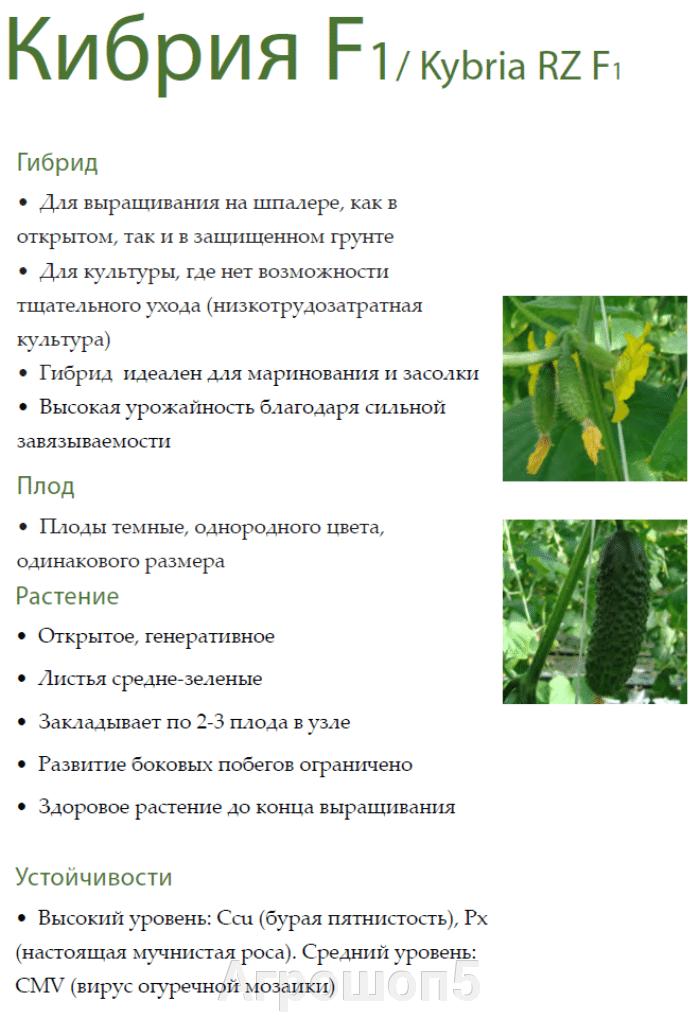Огурец Кибрия F1. 1000 семян. Rijk Zwaan. Высокоурожайный гибрид-партенокарпик для вертикального выращивания в ОГ и ЗГ. - фото pic_9ce437f3ffb66d6d5053f5703fa9c7d7_1920x9000_1.png