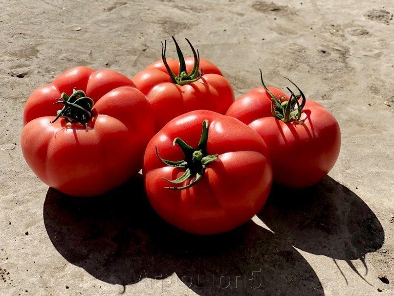 Томат Пинк Хит F1. 500 семян. Yuksel Seeds. Новый ранний розовый высокорослый БИФ томат для теплиц. Профупаковка - фото pic_291371c135315b28676aa26d518e8616_1920x9000_1.jpg