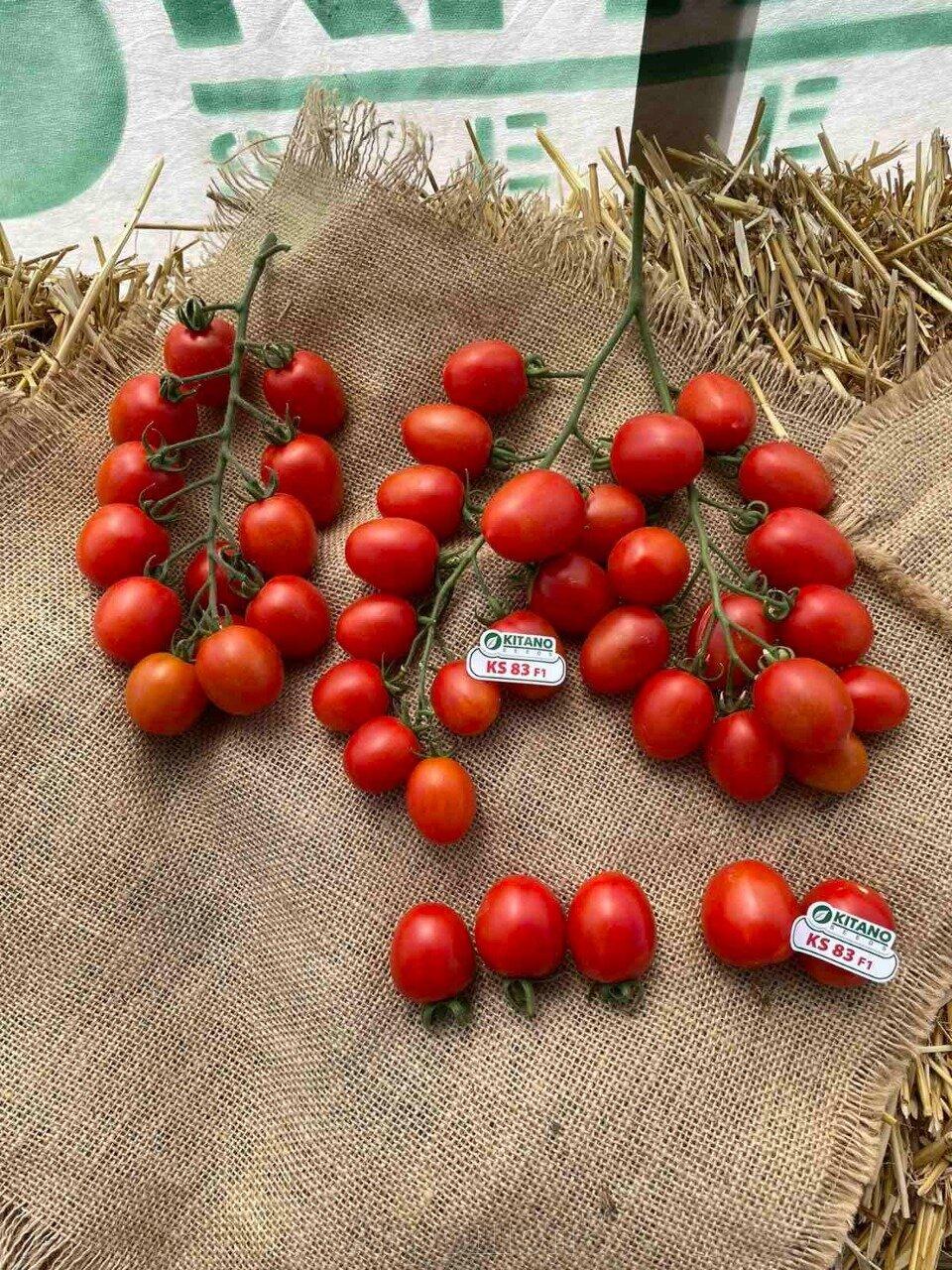 День поля по томатам от компании Kitano - фото pic_05bf40be9a4275203acb5952ef5c32ac_1920x9000_1.jpg