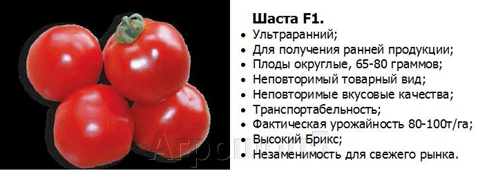 Томат Шаста F1. 10 тысяч семян. Урожайный ультраранний детерминантный красноплодный томат для ОГ. - фото pic_2e63d500b0a0cde7471107f829e1a80b_1920x9000_1.png
