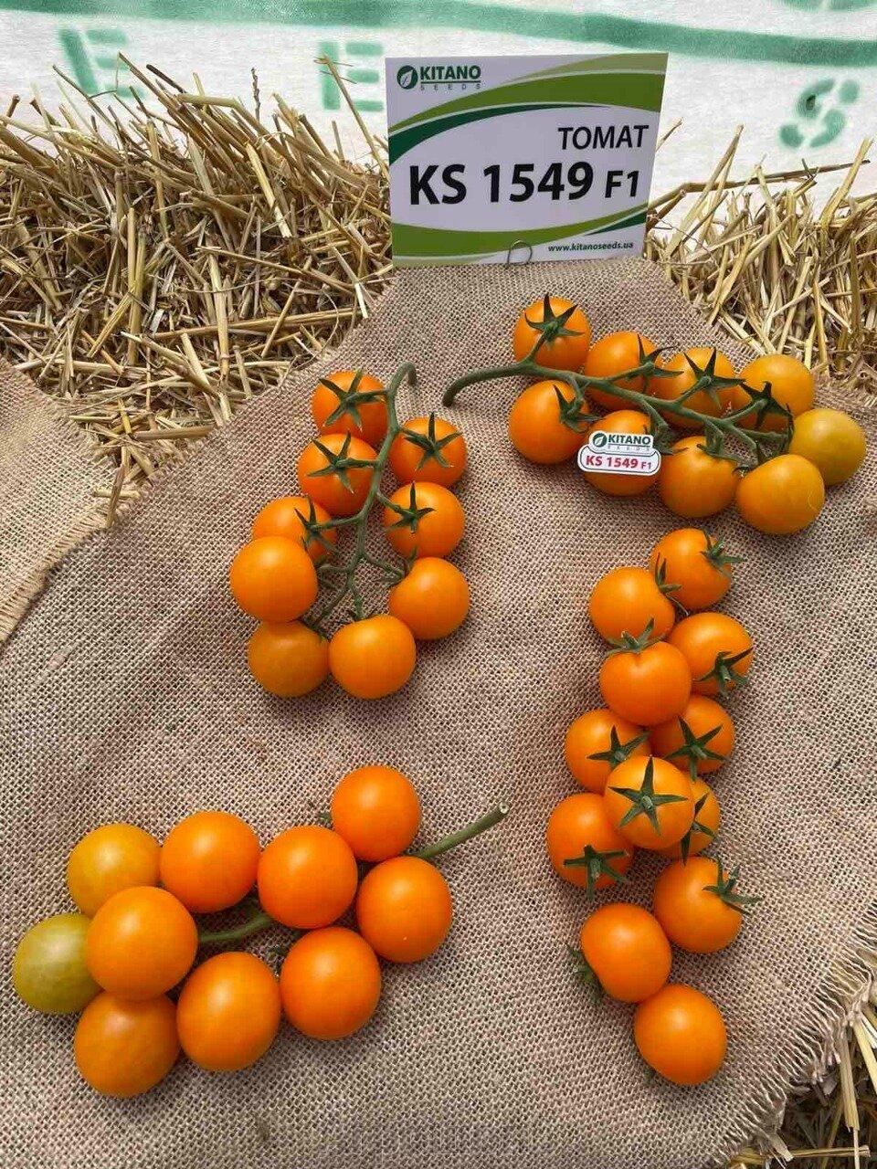 День поля по томатам от компании Kitano - фото pic_79eab6f71ecb1cb297c768be185629da_1920x9000_1.jpg
