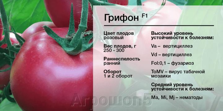 Томат Грифон F1. 1000 семян. Nunhems. Голландия Урожайный розовый ранний индет для двух оборотов в теплицу Профупаковка - фото pic_8df1f5260468ef76b755261480fbbeb9_1920x9000_1.png