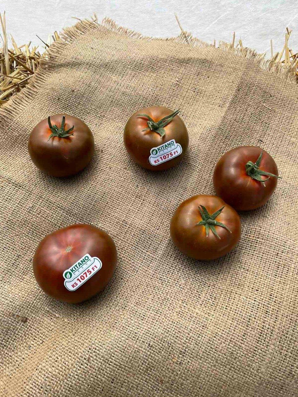 День поля по томатам от компании Kitano - фото pic_804778799877a7c65a8d20d37e6b4fe6_1920x9000_1.jpg