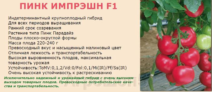 Томат Пинк Импрешн F1. 500 семян. Sakata. Урожайный ранний розовый крупноплодный высокорослый томат отличного качества. - фото pic_801aaf715d498a60e2c0d6a207ec82c6_1920x9000_1.png
