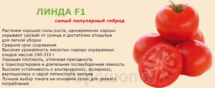 Томат Линда F1. 250 семян. Sakata. Крупноплодный салатный детерминантный томат для выращивания в ОГ. - фото pic_8b265228148bea5b4fdfed9bf0c95523_1920x9000_1.png