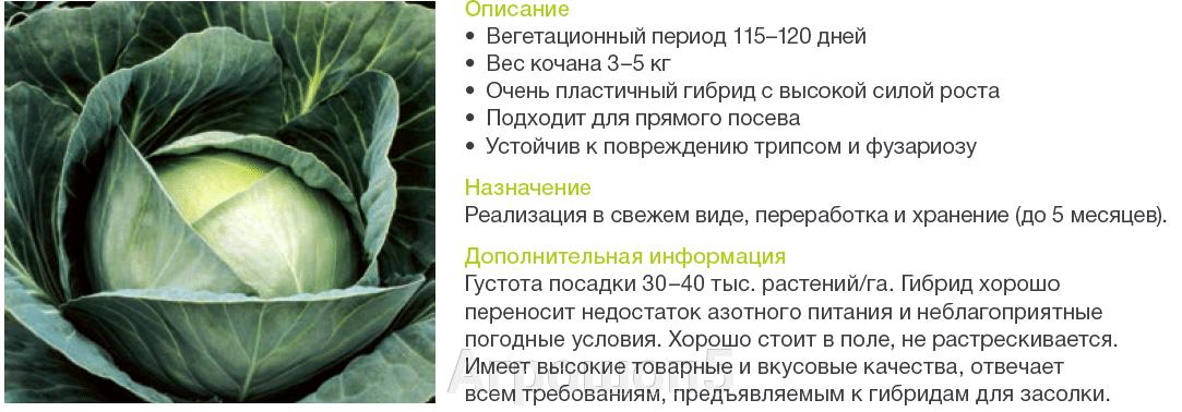 Капуста БК Агрессор F1. 2500 семян. Syngenta. Средне-поздняя белокочанная капуста надежная и пластичная. - фото pic_e59d2044827dc325a1b7c0171482e507_1920x9000_1.png