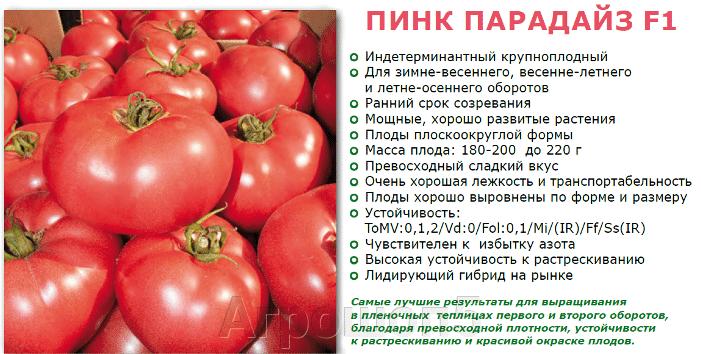 Томат Пинк Парадайз F1. 100 семян. Sakata. Урожайный ранний розовый крупноплодный высокорослый томат с эталонным вкусом. - фото pic_f3428ae71ccd8819a5d27aa60a55030b_1920x9000_1.png