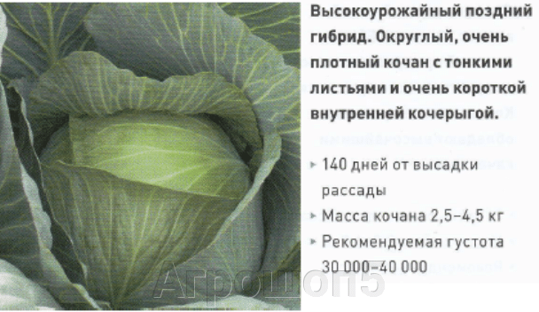 Капуста БК Леннокс F1. 2500 семян. Bejo. Урожайная поздняя белокочанная капуста для долгого хранения. - фото pic_bfb0e498b39049ad5c026e34915a3ff8_1920x9000_1.png