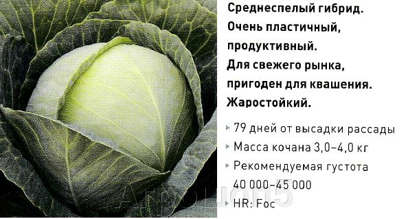 pic_101d10f986bda1c0485c94dbc8777eff_1920x9000_1.png