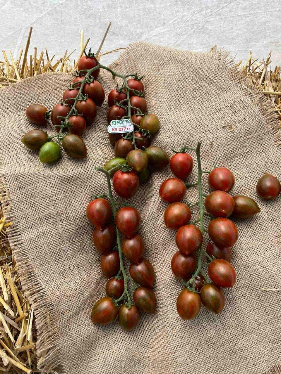 День поля по томатам от компании Kitano - фото pic_cb09818025c1d5e6579ebf990a4dea17_1920x9000_1.jpg