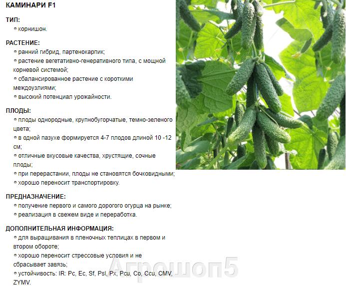 Огурец Каминари | КС 90 F1. 500 семян. Kitano. Япония. Ранний партенокарпик в теплицу: 1 и 2 оборот.. Профупаковка - фото pic_304072c8c9b26d15bf7a505e8a65d18a_1920x9000_1.png