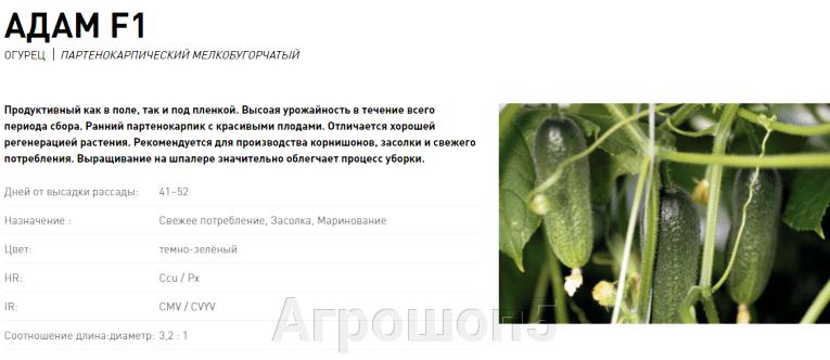 pic_6e5a6af8985582c570d64992f5af897b_1920x9000_1.png