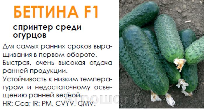 Огурец Беттина F1. 500 семян. Nunhems. Голландия. Ранний урожайный самоопыляемый для теплиц. Профупаковка - фото pic_ba574cb885d5fe3c2643fc658b863fbe_1920x9000_1.png