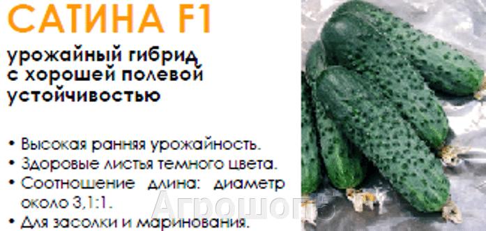 Огурец Сатина F1. 1000 семян. Nunhems. Урожайный и надежный огурец для открытого грунта (ОГ). - фото pic_47f3d30e75f4964b65c5c78df20e31c5_1920x9000_1.png