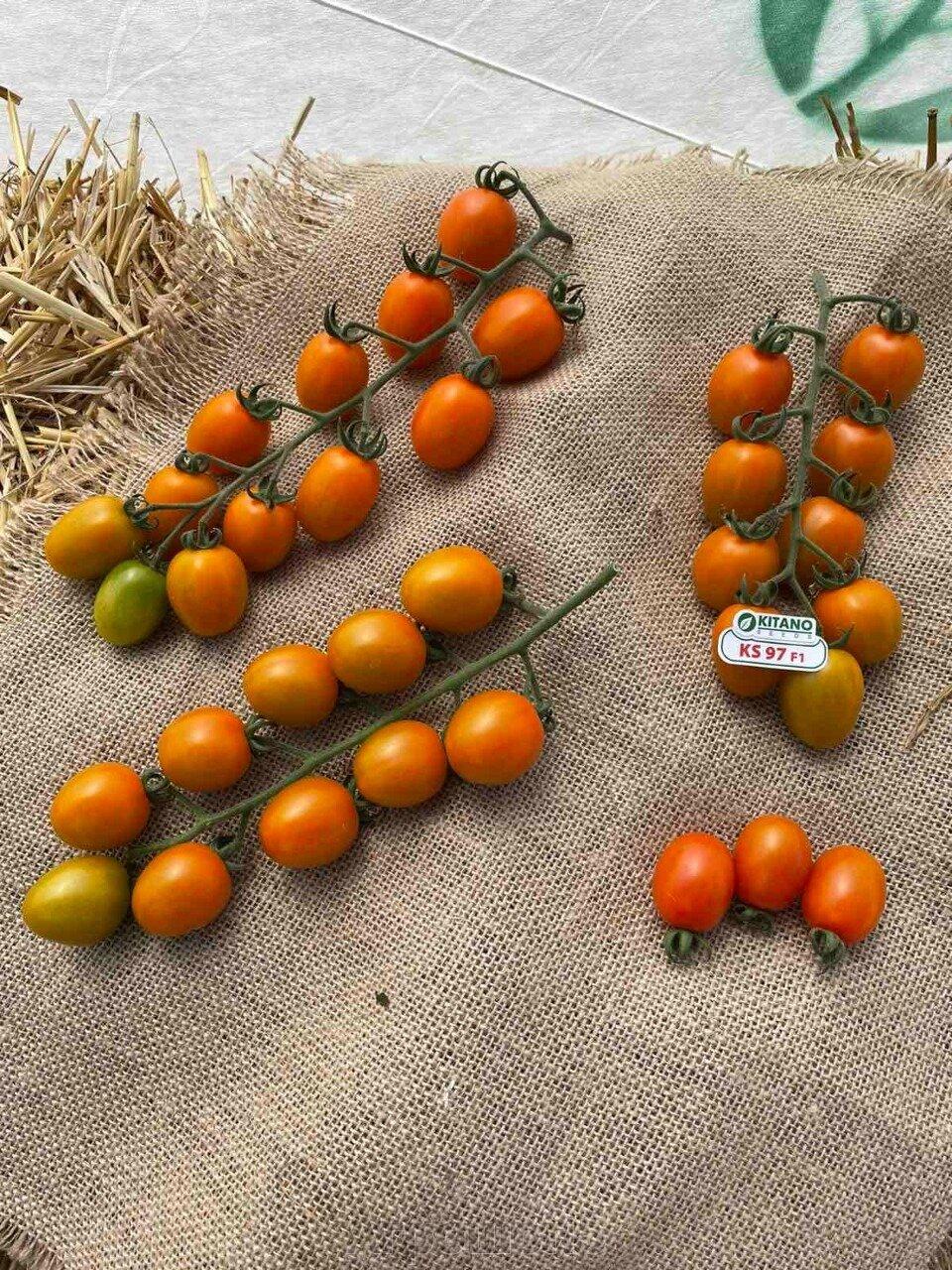 День поля по томатам от компании Kitano - фото pic_c265f96c7e6e3e18102f92adca9fd0c7_1920x9000_1.jpg