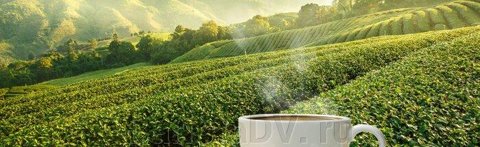 Чем отличается кофе из разных стран. - фото pic_46b31e8bc39b271_700x3000_1.jpg