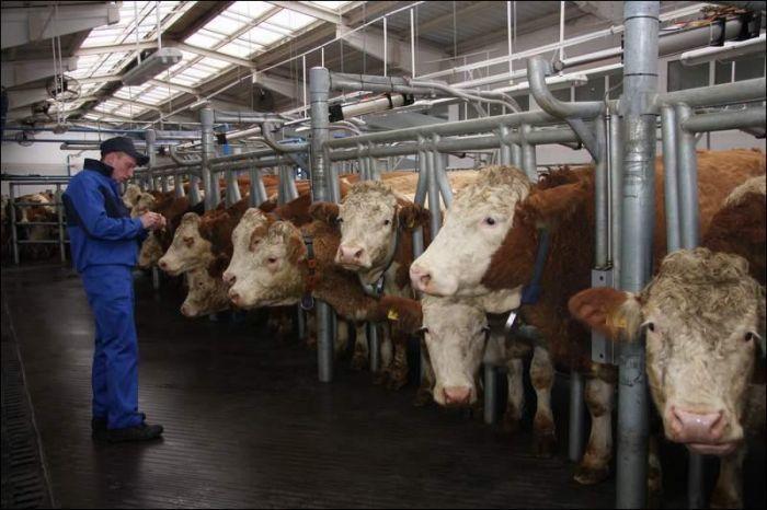 Солнечные коллекторы для животноводческих хозяйств. - фото 2