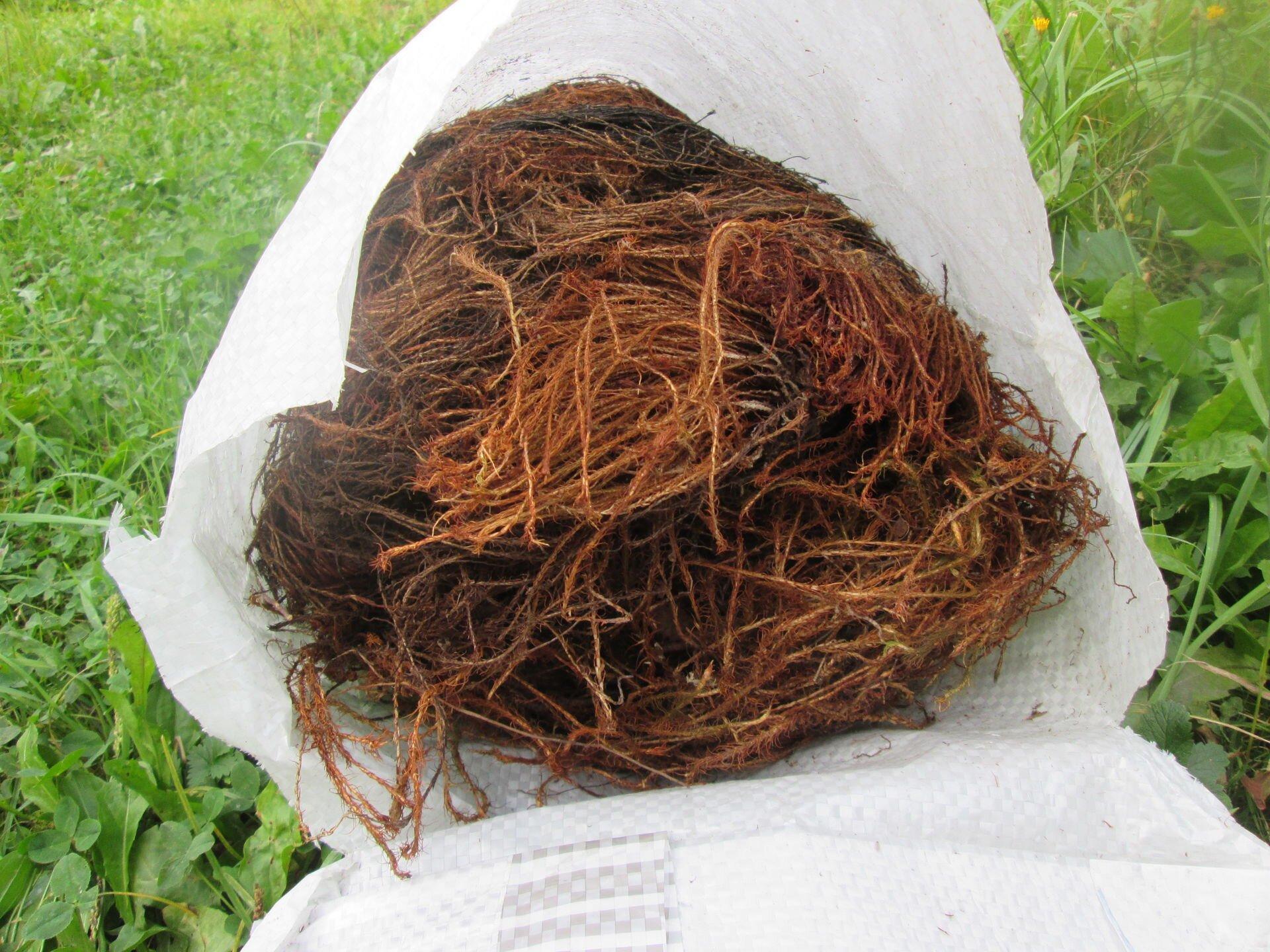 мох кукушкин лен для конопатки
