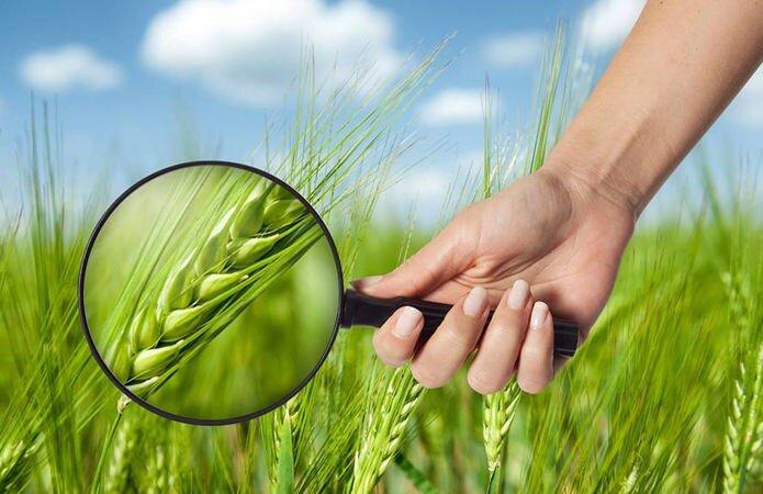 Защита растений - фото Защита растений