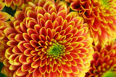Многолетние цветы - фото Многолетние цветы