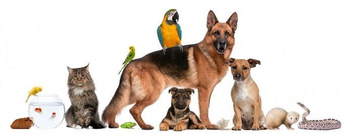 Товары для животных - фото товары для животных