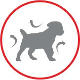 Royal Canin Giant Junior Роял Канин Джайнт Юниор Корм для щенков гигантских пород от 8 до 18 месяцев, 15 кг - фото skin_barrier.jpg