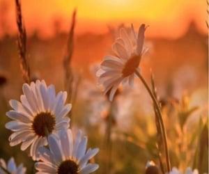 Краски осени - фото Image by â  princess Rose