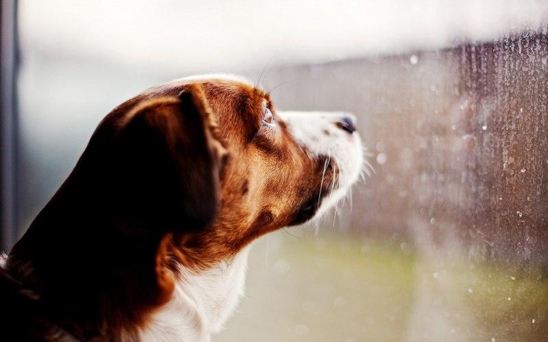 Во что поиграть с собакой, когда нельзя выйти на улицу?, изображение №1