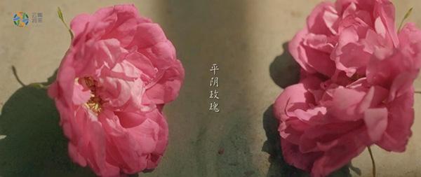 Картинки по запросу 膏药布英文 GIF