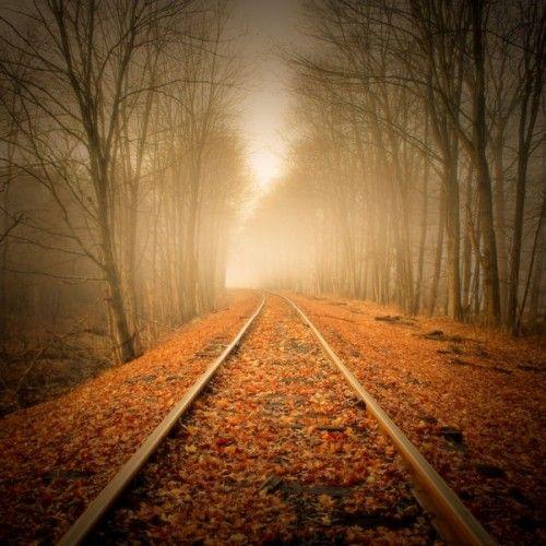 Краски осени - фото Image result for nature images 500 x 500